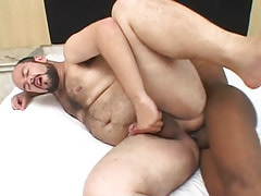 Chubby hairy man fucked by black gay